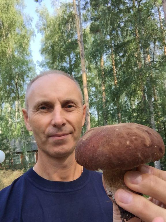 тсц-стиль-грибы-в-березке